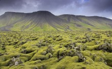 Reykjanes Peninsula moss and lava
