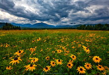 Adirondack Loj Road wildflower fields with lifting rain clouds on the High Peaks