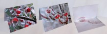 notecards,red,berries,buds,ice,storm,Messiah College,icestorm,notecard
