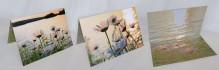 daisies,Tupper Lake,wild,notecard