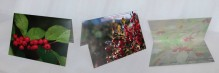 winterberry holly,red,green,berries,leaves,notecard,photo