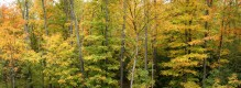 Adirondack Autumn Forest