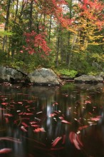 Adirondack, autumn, forest, foliage, colored, leaves, maple, red, yellow, fall, colorful, Adirondack Park, seasons
