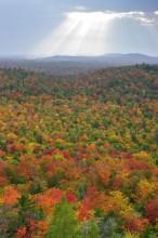Adirondacks, Adirondack, autumn, leaves, foliage, color, yellow, maple, maples, reds, Adirondack Park, fall, Tupper Lake