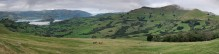 Banks Peninsula,Akaroa,Akaroa Harbour,South Island,New Zealand,cattle,farming,pasture,pastures,panoramic,view,up high,on