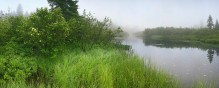 Big Brook, Long Lake, grassy, river, bank, misty, morning, iris, Adirondacks, Adirondack Park