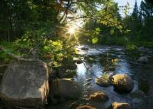 spider web, backlit, illuminated, Boreas River, sun, sunlight, Adirondacks