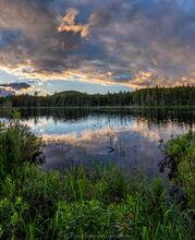 bog near Little Tupper Lake