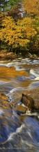 Buttermilk Falls,Raquette River,gold reflections,vertical panorama,autumn,2014,Buttermilk Falls gold reflections,panoram