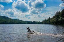 Cascade Lake, splashing dog on a sunny summer day