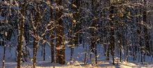 Debar Mt,Debar Mt Trail,snowmobile trail,snowy woods,forest,snowy forest,Debar Mt snowy forest,