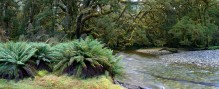 river,New Zealand,Dusky Track,Fiordland National Park,rainforest,