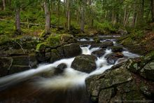 East Jimmy Creek,spring,2019,stream,forest,