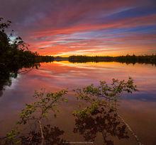Fish Creek Pond,Fish Creek Ponds,twilight glow,birches,reflection,twilight,sunset,St Regis wilderness,pond,Adirondack,lake