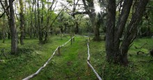 Omara Botanical Park, Isla Navarino, Tierra del Fuego, park, path, peaceful, green, walk, pathway