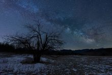 Heaven Hill Farm,Heaven Hill Farm trails,orchard,field,apple tree,Milky Way,night sky,stars,night,April,2020,trails,