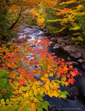 Henderson Lake outlet,Henderson Lake,forest,stream,forest stream,fall,foliage,color,