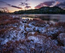 Holcomb Pond,Sentinel Wilderness,April,snow,2020,pond,shoreline,bushes,snowfall,