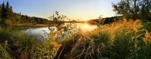 Horseshoe Lake sunset-lit grasses