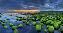 Halfnarfjordur coastal rocks w seaweed