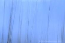 Skaftafell winter grasses abstract