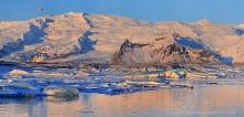 Jokulsarlon,seals,telephoto panorama,Oraefalljokull,sunrise,Iceland,icebers,seals on icebers,glacier lagoon,glacier