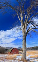 barn,Keene Valley,winter,red,tree,vertical,Cascade Mt,old,sagging,rustic,rural