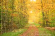 Lake Eaton logging road,logging road,Lake Eaton,soft focus,focus blur,double exposure,2014,fall,autumn road,country lane