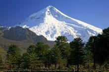 Lanin Volcano behind Araucaria Trees