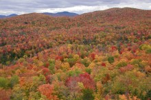 Ledger Mountain,view,treetop,autumn,colors,fall,foliage,leaves,red,colorful,landscape,rolling,mountains,Adirondack Park,