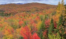 Ledger Mountain,Indian Lake,Adirondacks,Adirondack Park,autumn,fall,foliage,brilliant,Adirondack,panorama,Wakely Mt,tree