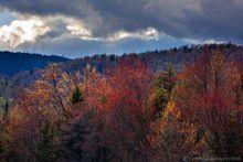 Lewey Lake,budding maple,maple buds,red,maple,springtime,spring,