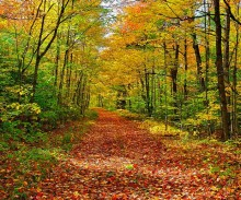 logging road,Lake Eaton,fall,autumn,leafy,covered,leaf,near,Adirondacks,road,lane,