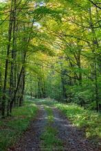 logging road, Lake Eaton , summer, 2020, old road, forest, Whitney lands,