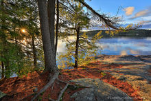 Lower Saranac Lake spring sunshine through shoreline pines
