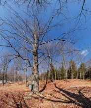 Adirondack Gold Maple Farm,maple farm,Thurman,maple,syrup,bucket,tin,traditional,springtime,spring,farm,sugar maple,