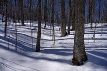 Marcy Dam trail,hardwood forest,late winter,forest,winter,trees,snow,