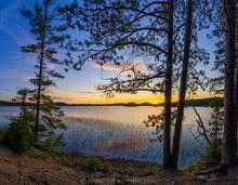 Middle Saranac Lake summer sunset framed through pines