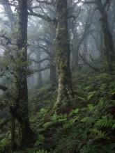 Mt. Holdsworth, forest, Tararua Range, New Zealand, cloudy, dark