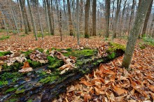 Nobleboro,Nobleboro forest,state forest,rotten,log,mossy,forest,Jones Rd, Jones Road,November,rotting