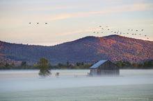 Vermontville,Norman Ridge,barn,autumn,Canada geese,sunrise,frost,old barn