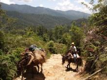 Park-required guide & mules, Pico Duarte