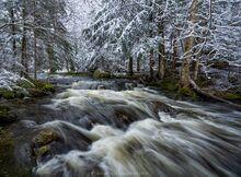 Owens Pond outlet stream spring snow dusting, Sentinel Wilderness