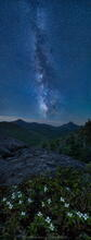 Phelps Mt wildflowers with the Milky Way centered of Mt Marcy and Colden at 3am on a June night