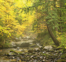 Pine Brook,Forked Lake,magical,mystical,forest,stream,brook,Adirondacks,Adirondack,Long Lake,foggy,rainy,autumn
