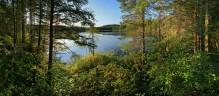Rankin Pond,pond,bog,wetland,lake,Adirondack,Adirondack Park,forest,afternoon,coniferous,spruce,hemlock,dense