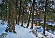 Raquette River,winter,river,Adirondack,2016,Johnathan Esper,hemlock forest,forest,hemlocks,North Point Rd,