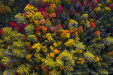 Rich Lake, drone, aerial, forest, forest canopy, drone, detail, fall, 2020, fall forest,