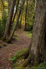 Rich Lake, Newcomb, Rich Lake Newcomb, Rich Lake VIC trails, VIC trails, VIC, Newcomb VIC,fall, 2020, old growth cedar, cedar...