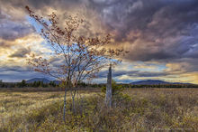 Rock Lake,bog,tree stump,stump,dogwood,dramatic sky,wetlands,Rock Lake bog tree stump,Adirondacks,Johnathan Esper